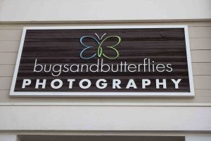 Bugs+Butterflies