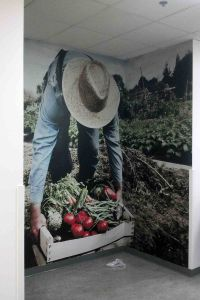 Farmer Wall Graphics